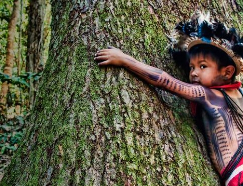 Amazzonia: Non lasciamola sola