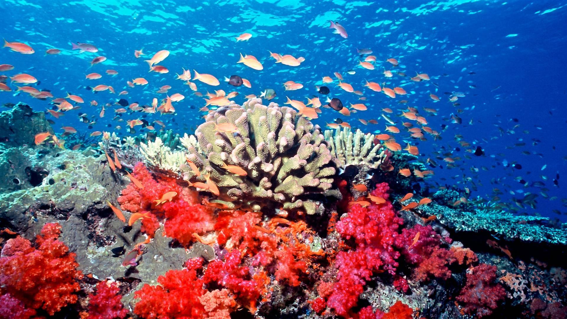 Tutelare le biodiversità per salvare l'umanità e la sua economia